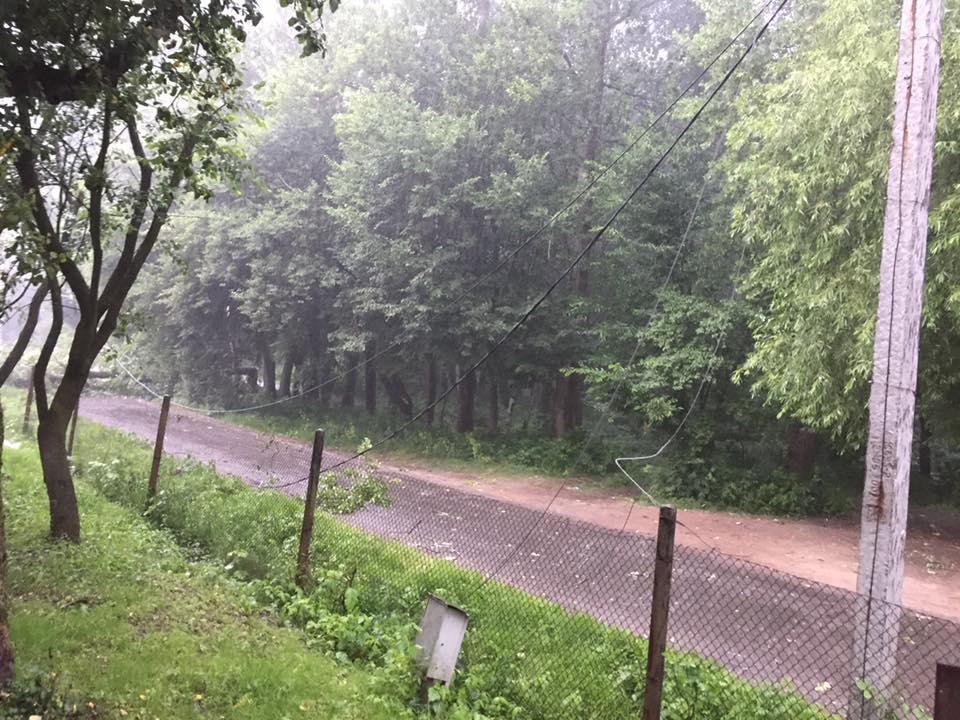 Буря уЛьвові повалила дерева