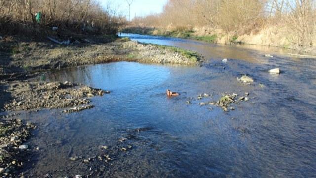 забруднення річок